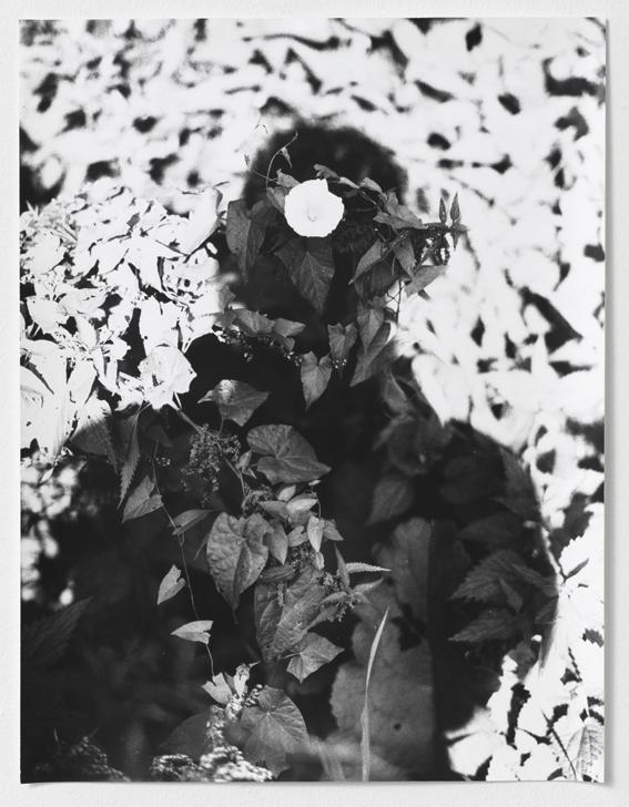 3-untitled-camouflage